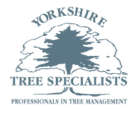 Yorkshire Tree Specialists